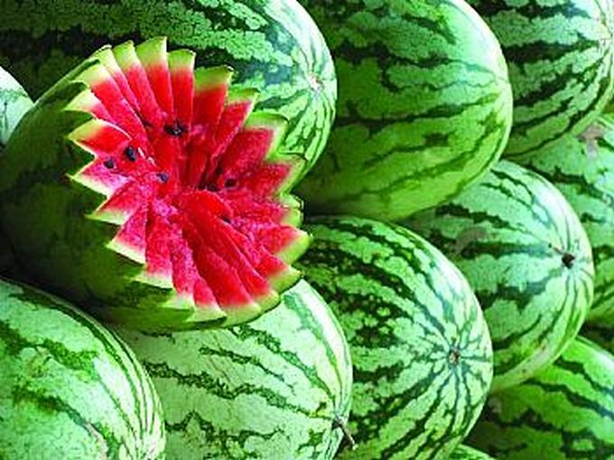 uzgoj lubenica u plastenicima