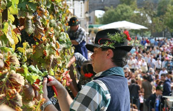 festival vina maribor slovenija