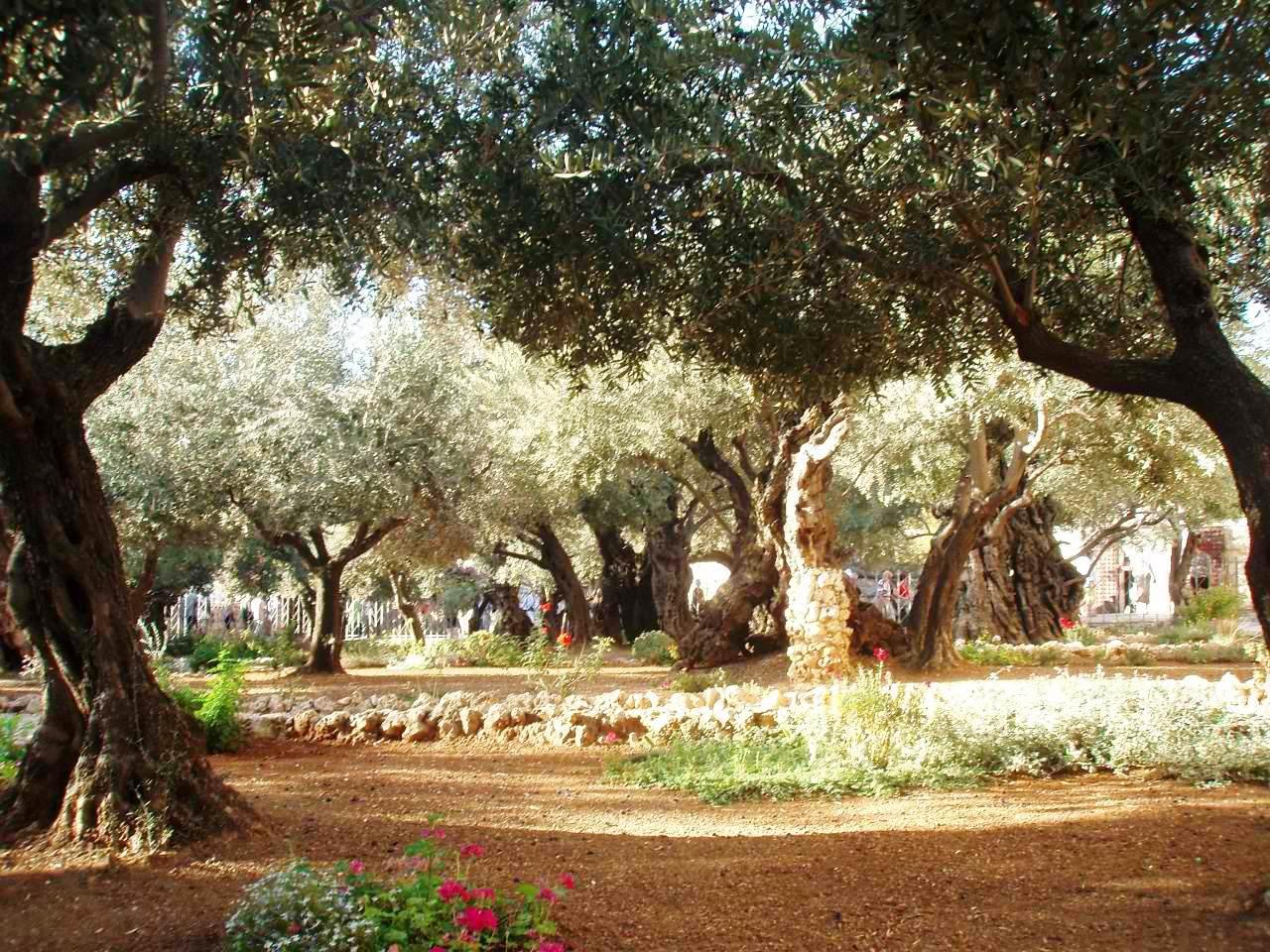 getsimanski vrt jerusalim