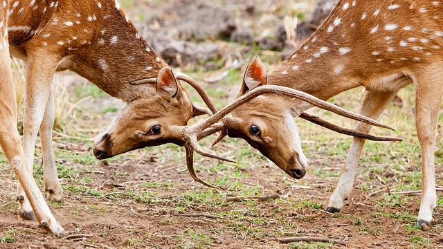 nacionalni park Bandhavgarh indija
