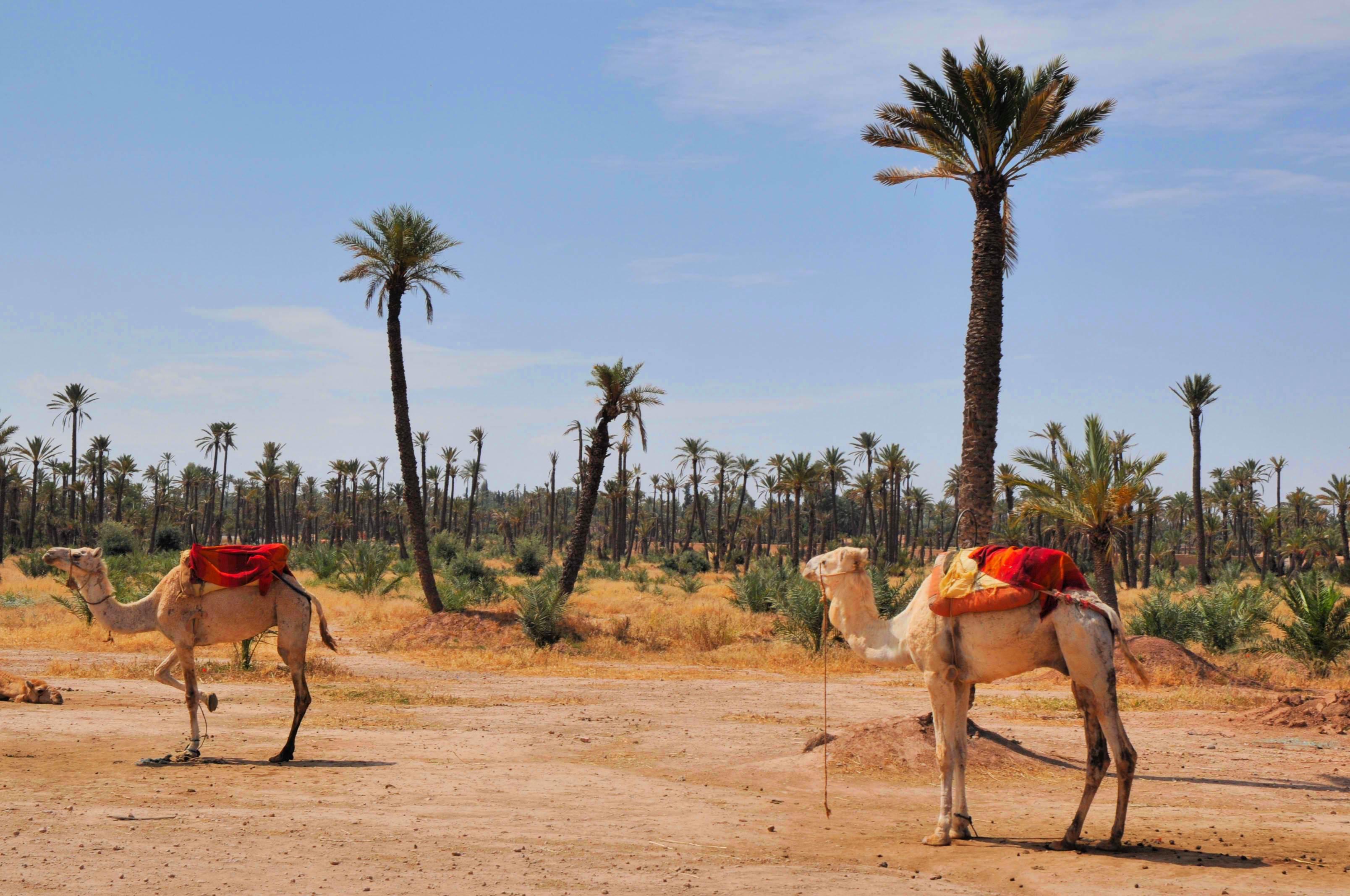marakes  maroko