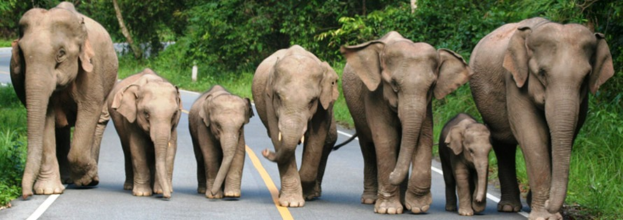 nacionalni park khao yai tajland