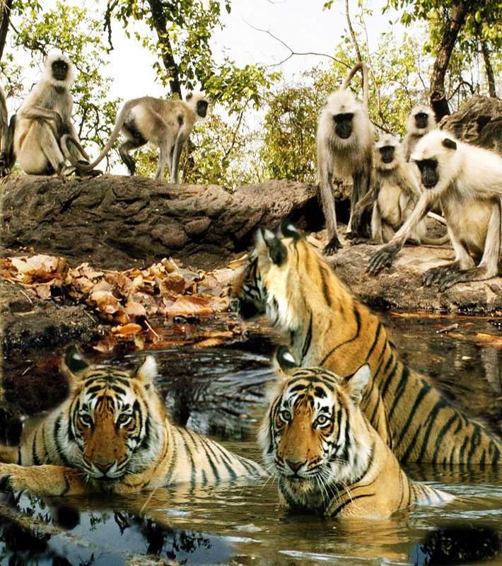nacionalni park indija Bandhavgarh