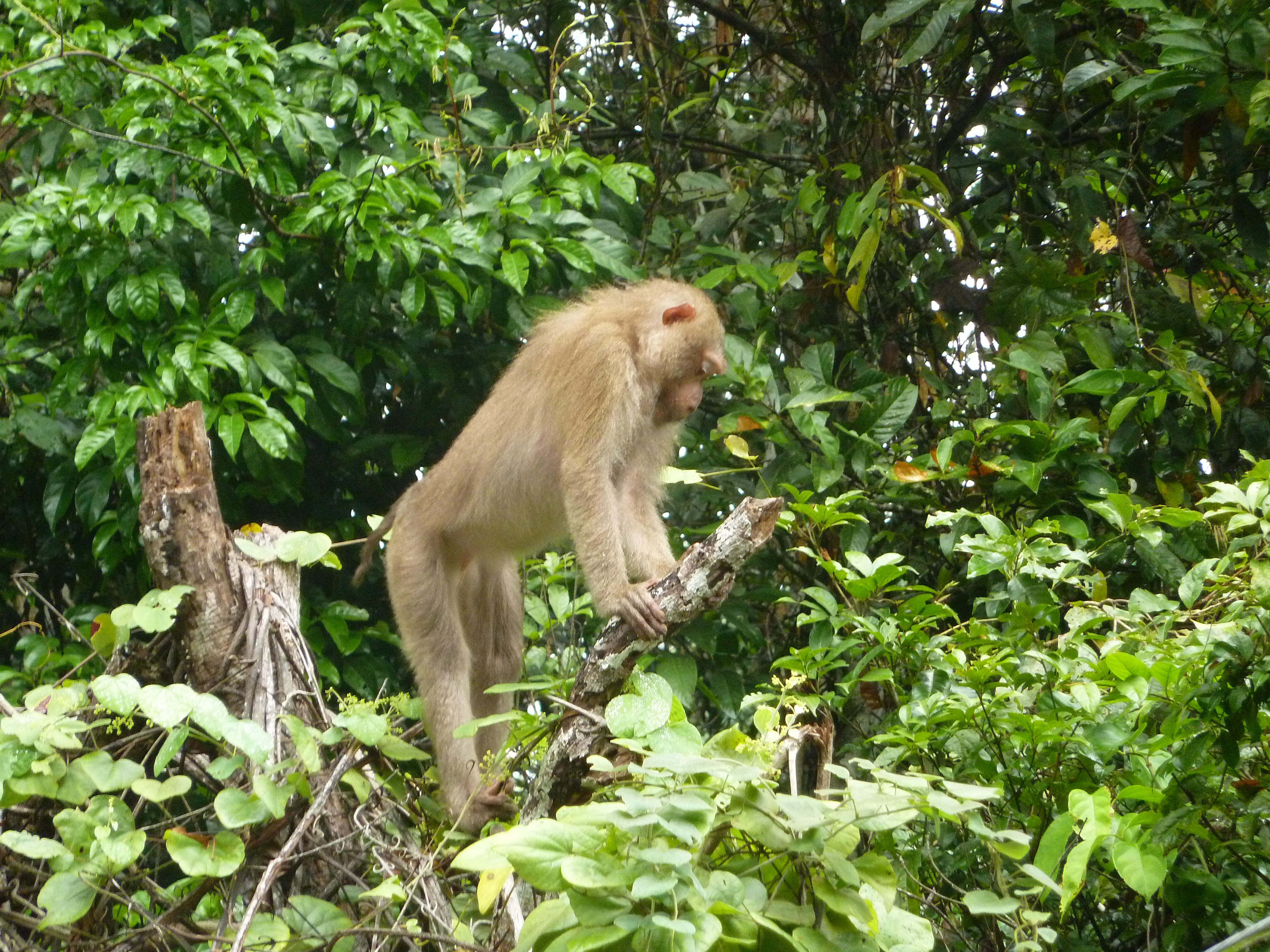 nacionalni park khao yai