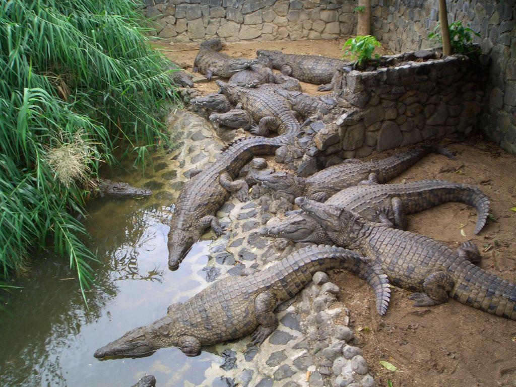 la vanille crocodile park mauricijus